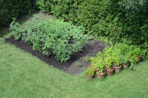Jardin_fines_herbes