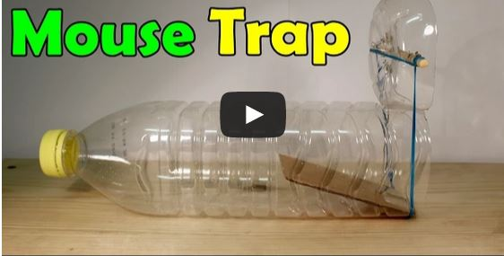 Fabriquer un pi ge souris maison exterminer vos souris - Piege a cafard maison ...